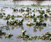 Perishable farm produce go waste in Pusiga District