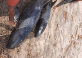 FDA warns against consumption of fishes washed ashore