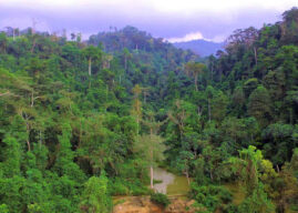 An important forest reserve in Ghana -The Atewa Range
