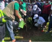 Green Ghana Project: Greater Accra MMDCEs charged to provide report in 3 months