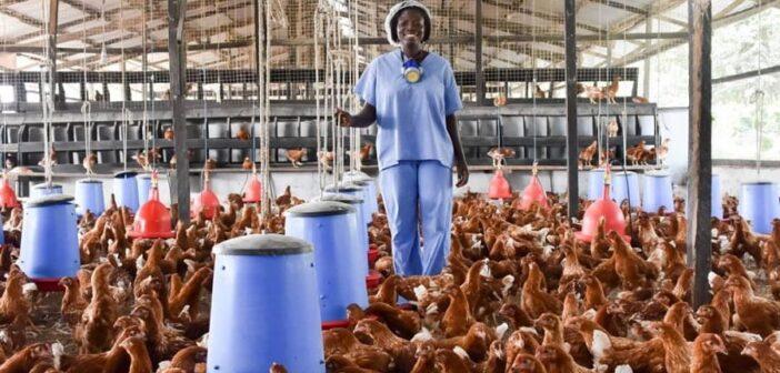 Ghana's poultry industry risks collapsing – GAFA