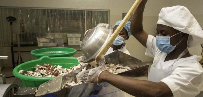 Takoradi: Agric Minister tours ava Coconut Processing plant.